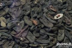 Auschwitz 23