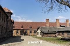 Auschwitz 41
