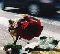 morti sulla strada rosa