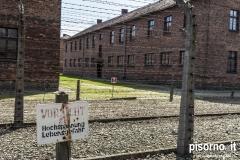 Campo di concertamento di Auschwitz